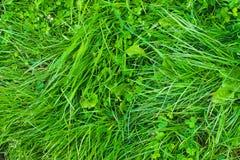 Textur för grönt gräs Royaltyfria Foton