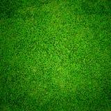 Textur för grönt gräs Arkivbilder