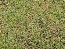 Textur för grönt gräs för formgivare royaltyfri foto