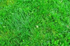Textur för grönt gräs från ett fält royaltyfri fotografi