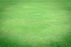 Textur för grönt gräs från ett fält Royaltyfri Bild