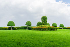 Textur för grönt gräs och trädgårds- blå himmel Fotografering för Bildbyråer