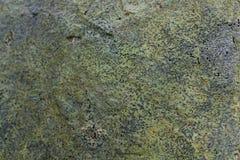 Textur för Grungeeffektbakgrund av laven och någon mossa på en vagga Royaltyfri Bild