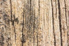 Textur för journal för stranddriva wood Arkivfoton