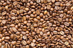Textur för kaffebönor Arkivbilder