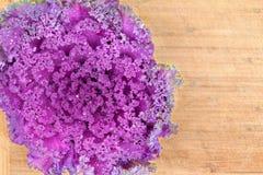 textur för Lockig-blad purpurfärgad grönkålcloseup Fotografering för Bildbyråer