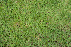 textur för makro för green för bakgrundsclosegräs upp fotografering för bildbyråer