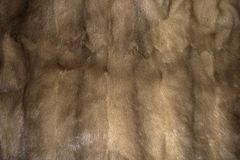 Textur för minkpälsbakgrund royaltyfri foto