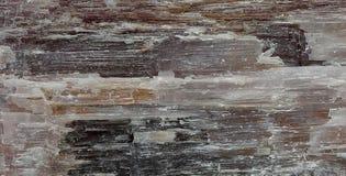 textur för mossrocksten Arkivfoto