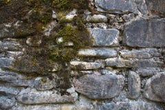 textur för mossrocksten Arkivbild