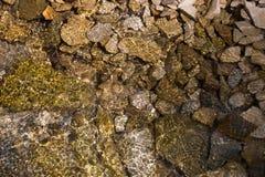 textur för mossrocksten Royaltyfri Fotografi