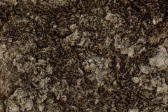 textur för mossrocksten Royaltyfri Bild