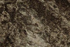 textur för mossrocksten Royaltyfria Bilder