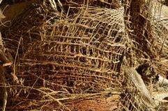 Textur för närbild för palmträdskäll Arkivbilder