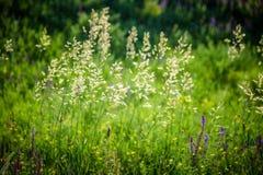 textur för naturlig bakgrund för grönt gräs Arkivbild