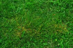 textur för naturlig bakgrund för grönt gräs Arkivbilder