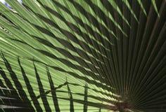 Textur för naturlig bakgrund ljus skugga Palmbladet Fotografering för Bildbyråer