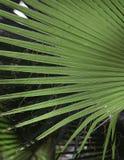 Textur för naturlig bakgrund ljus skugga Palmbladet Royaltyfri Fotografi
