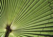 Textur för naturlig bakgrund ljus skugga Palmbladet Royaltyfri Foto