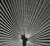 Textur för naturlig bakgrund svart white ljus skugga Palmbladet Royaltyfria Foton