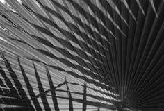 Textur för naturlig bakgrund svart white ljus skugga Palmbladet Arkivfoto