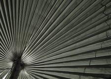 Textur för naturlig bakgrund svart white ljus skugga Palmbladet Royaltyfria Bilder