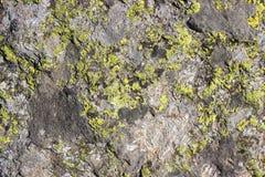 Textur för naturlig bakgrund, vaggar med laven Royaltyfria Bilder