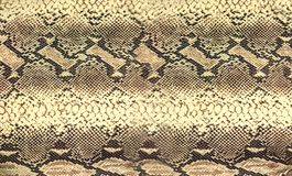 Textur för ormhud Sömlös bakgrund för reptil för design arkivbilder