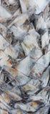 Textur för palmträdstam Arkivbilder