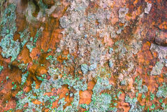Textur för Platan trädskäll Royaltyfria Bilder