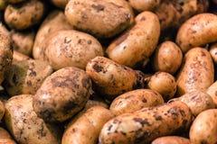 Textur för rå potatis arkivfoto