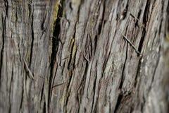 Textur för skällträd Bakgrund för skällträd Abstrakt textur och bakgrund för formgivare Royaltyfria Bilder