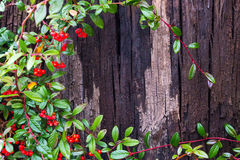 Textur för skällträd med blad arkivfoto