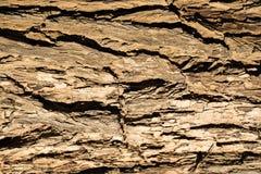 Textur för stam för trädskäll Royaltyfri Foto