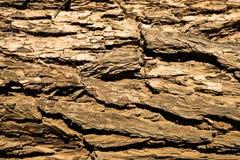 Textur för stam för trädskäll Fotografering för Bildbyråer