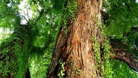 Textur för träd` s Arkivfoto