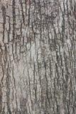Textur för trädskäll ett gammalt träd Royaltyfri Fotografi