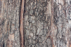 Textur för trädskäll ett gammalt träd Royaltyfria Bilder