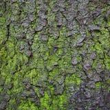 Textur för trädskäll för bakgrund arkivbild