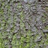 Textur för trädskäll för bakgrund arkivbilder
