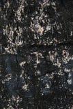 Textur för trädskäll för bakgrund Fotografering för Bildbyråer