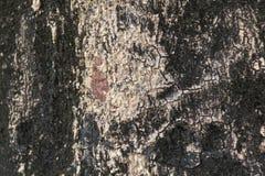 Textur för trädskäll för bakgrund Royaltyfri Foto