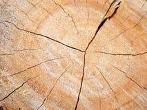 textur för trädstubbe royaltyfri bild