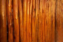 textur för träpinnar i rad från Mexico Arkivbild
