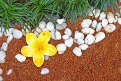 textur för blommagräsrock Royaltyfri Bild