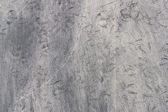 Textur från bird& x27; s-spår på sanden Royaltyfri Bild