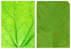 Green leaf backgrounds patterns Stock Photos