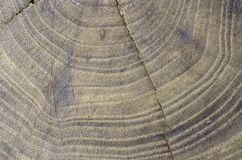 Textur i trät av en trädalm, abstrakt begrepp Royaltyfri Bild