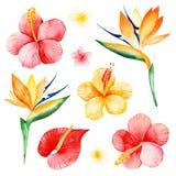 Textur med plumeria, hibiskus, fågel av paradiset royaltyfri illustrationer