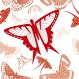 Textur med röda fjärilar med den genomskinliga vingen Royaltyfri Fotografi